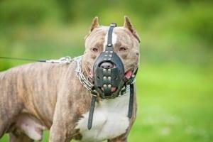 Ein Anwalt für Tierrecht in Krefeld kennt sich auch mit den Gesetzen rund um den Maulkorbzwang aus.
