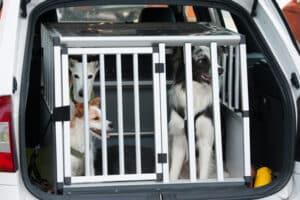 Im Auto sollte ein Hund möglichst in einer Transportbox mitfahren.
