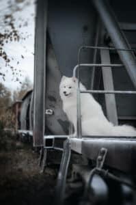 Mit Beisskorb für Hunde fahren die Vierbeiner häufiger günstiger im öffentlichen Personennahverkehr.