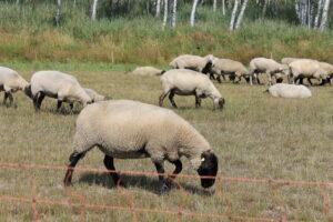 Bio-Zertifikate stehen für eine artgerechte Tierhaltung.