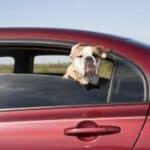 Auf gehts! Doch halt! Erfüllt der kleine auch die Einreisebestimmung von Österreich für Hund, Katze und Frettchen?