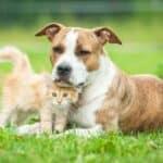 Die Einreisebestimmungen von Frankreich sind für Hund und Katze die gleichen.