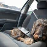 Einreisebestimmungen für Hunde und Katzen: Nach Schweden geht´s nur mit Tollwutimpfung.