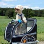 Die Einreisebestimmungen für einen Hund nach Deutschland folgen der EU-Norm.
