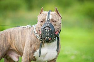 Die Einreisebestimmungen für den Hund von Frankreich sehen vor, dass Kampfhunde einen Maulkorb tragen müssen.