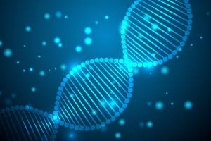 Die DNA-Analyse ermöglicht ein besonders genaues Abstammungsgutachten.
