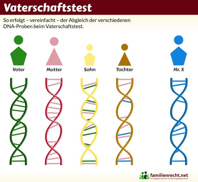 Infografik zur Auswertung beim Vaterschaftstest