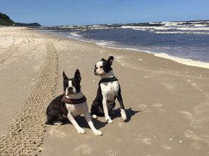Ferien mit Hund in Holland verbringen? Ohne Heimtierausweis geht's nicht.
