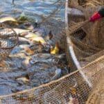 Das Fischereirecht wird durch das Fischereigesetz erläutert.
