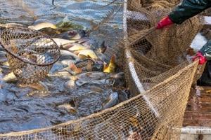 Das Fischereirecht wird durch das Fischereigesetz geregelt.