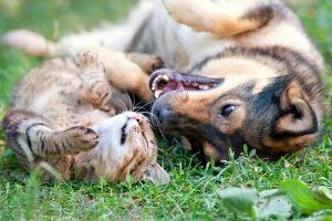 Fliegen mit Hund und Katze sollte vorher organisiert werden.