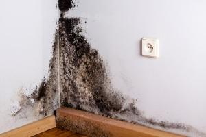 Eine fristlose Kündigung durch den Mieter ist z. B. bei Schimmel in der Wohnung möglich.