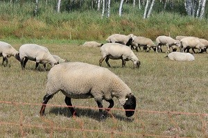 Das Futtermittelgesetz regelt die Nahrung von Tieren