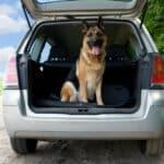 Ein Hund im Auto sollte stets gesichert sein.
