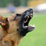 Ein Hund im Bus kann andere Personen verängstigen. Verwenden Sie daher ein Maulkorb.