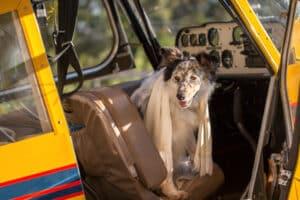 Hunde im Flugzeug sind durchaus gestattet.