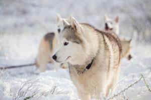 Gerade angesichts der prekären Situation der Straßenhunde im Ausland entscheiden sich Menschen hierzulande zur Hundeadoption.