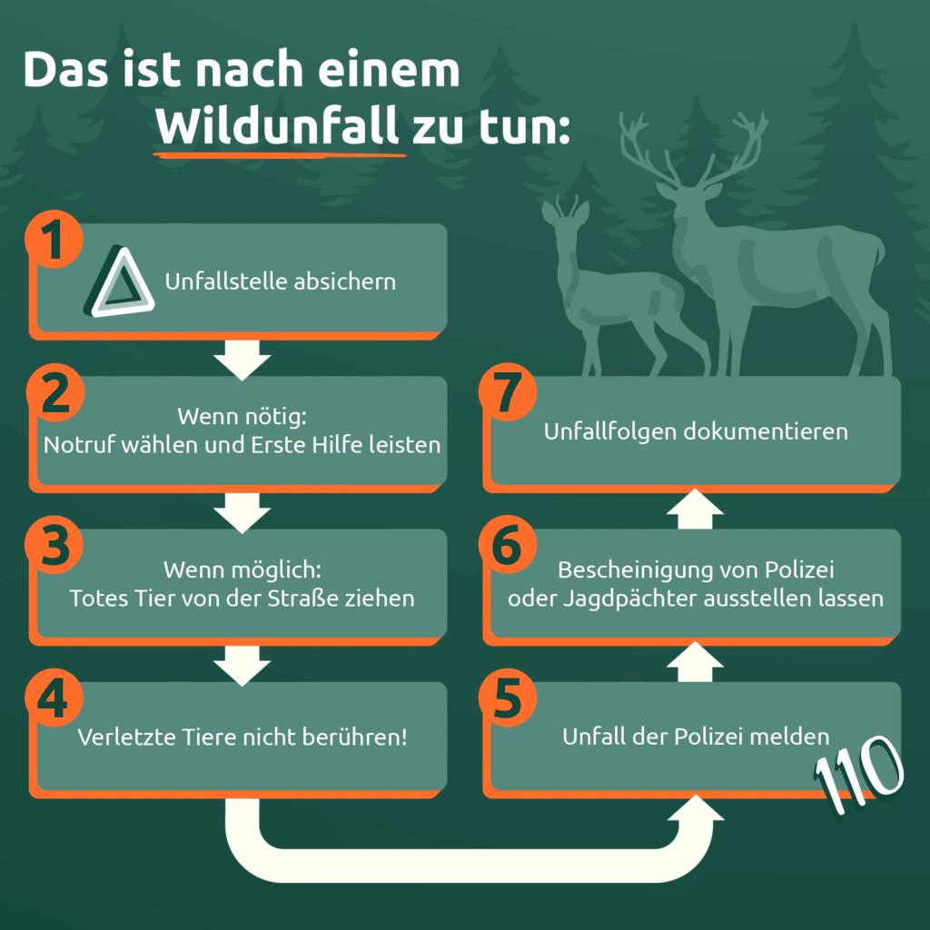 Die Infografik zeigt, was nach einem Wildunfall zu tun ist.
