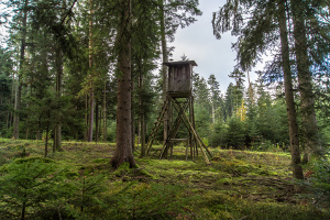 Jagdrecht: Der Jäger darf ausschließlich in seinem Jagdrevier jagen.