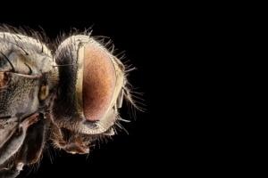 Bekommen Sie bei Fliegen oder Kakerlaken im Hotelzimmer Ihr Geld zurück? Dies hängt vom Urlaubsland ab.