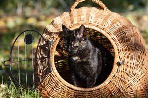 Die Katze transportieren: Auch im Auto ist das möglich.