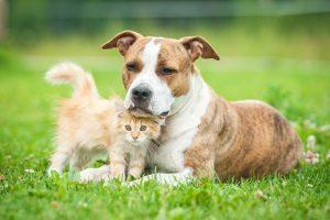 Die Einreise mit Hund verläuft nach EU-Bestimmungen.