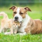 Ein Urlaub in Kroatien mit Hund ist unter EU-Vorschriften möglich.