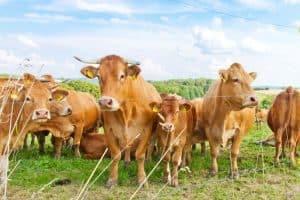 Ob Kühe, Schweine oder Hühner - Tierrechte sind in Deutschland kein großes Thema.