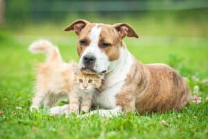In einem Wesenstest kann der Listenhund beweisen, dass er nicht gefährlich ist.