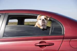 Können Sie Listenhunde in den Urlaub mitnehmen? Achten Sie auf die länderspezifischen Einreisebestimmungen.