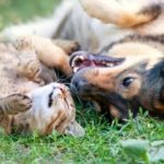 Die Maulkorbpflicht soll das Risiko von einem Hund gebissen zu werden, reduzieren.