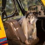 Mietwohnungen mit Hund: Wollen Sie mit ihrem Vierbeiner einziehen, sind Sie meist auf die Zustimmung Ihres Vermieters angewiesen.