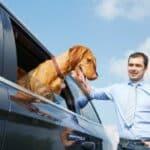 Mit dem Hund nach England: Aber nicht ohne Heimtierausweise. Den bekommen Sie beim Tierarzt.