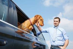 Mit dem Hund nach England: Aber nicht ohne Heimtierausweis. Den bekommen Sie beim Tierarzt.