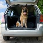 Mit Hund nach Irland: Bevor es losgeht, ist Einiges zu beachten.