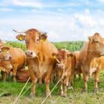Die Nutztierhaltungsverordnung gibt vor, wie Tiere gehalten werden müssen.