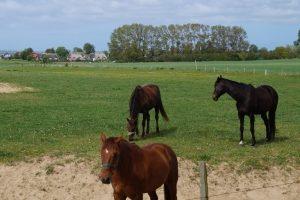 Pferd und Reiter können gemeinsam reisen. Der Besitzer sollte sich vorher allerdings informieren.