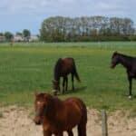 Pferderecht ist kein eigenständiges Rechtsgebiet