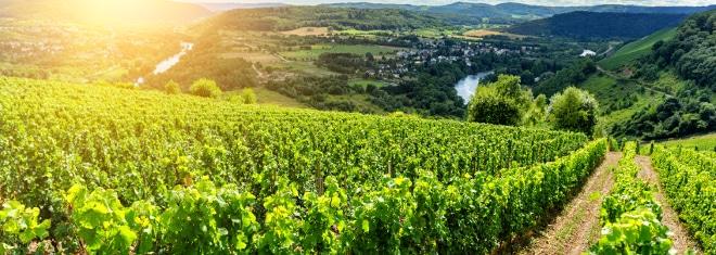 Mehr als nur Weinanbaugebiet: Finden Sie Ihren Rechtsanwalt in Hürth, der Verkehrsrecht zu seinen Stärken zählt