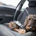 Das Reisen mit Hund sollte gut geplant sein.