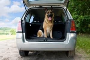 Nicht nur Straßenhunde kommen in die Vermittlung. Mancher Besitzer gibt sein Tier auch direkt im Tierheim ab.