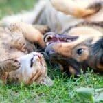 Der Tierhandel läuft gut. Die Tiere werden im Ausland teils unter schlimmen Umständen gezüchtet, um sie nach Deutschland zu verkaufen.