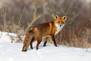 Tierschutz ist auch auf der Jagd wichtig. Menschen sind dem Tier gegenüber in der Verantwortung .