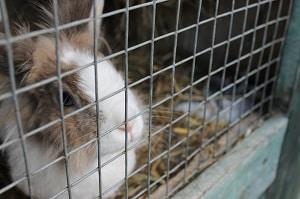 Der Tierschutz in der Massentierhaltung: Tierschützer bemängeln zu lasche Vorgaben.