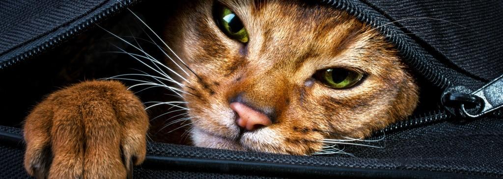 Das Tierschutzgesetz für das Leben und Wohlbefinden von Tieren