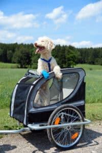 Die Tierversicherung für den Hund übernimmt auch Schäden, die durch das Tier verursacht wurden.