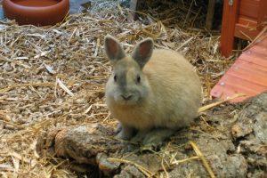 Eine Tierversicherung kann für Kaninchen ebenfalls in die Bresche springen.
