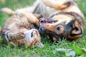 Die Tollwutimpfung beim Hund geht mit Kosten einher. In der Regel belaufen sie sich auf mindestens 30 Euro.