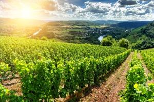Umweltschutz: Welche Gesetze und Rechtsgebiete gibt es in Deutschland, die diesem Zwecke dienen?
