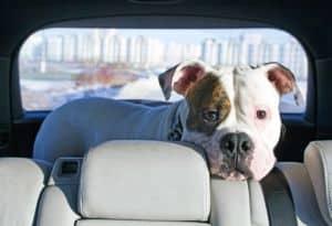 Urlaub mit Hund: Finnland, Norwegen, Schweden oder Dänemark. Der Norden ist ein beliebtes Ziel.